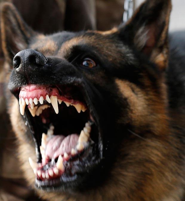 Police Dog Bites Man Face