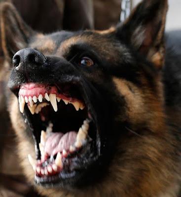 Dog Bite Lawyer Los Angeles