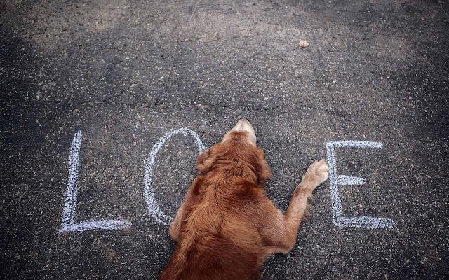 Foto van een hond met de tekst love op de grond