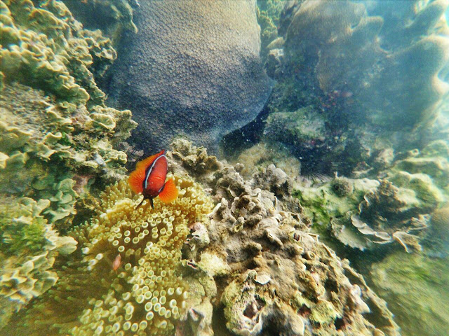 Nikmati Snorkeling di Pulau Abang Bersama Galang Bahari Wisata