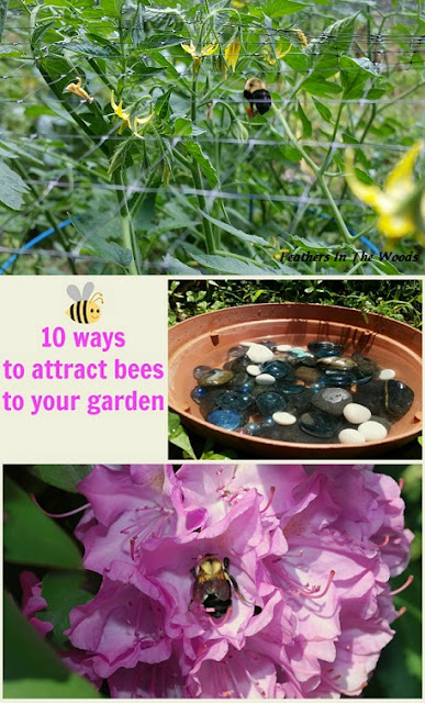 How to attract bees to garden