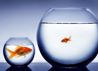 O Perigo e a Tentação de Comparar o Seu Ministério Com o de Outros