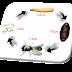 Mengenal Berbagai Spesies Umum Lalat