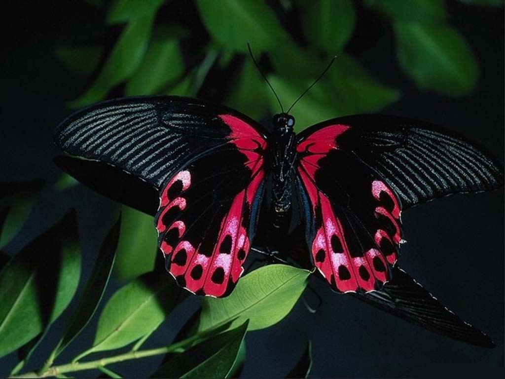 Picturespool Beautiful Butterfly Picutres