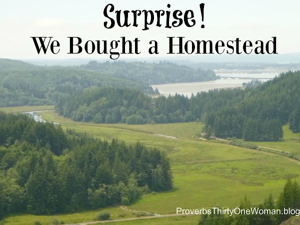 Surprise! We Bought a Homestead