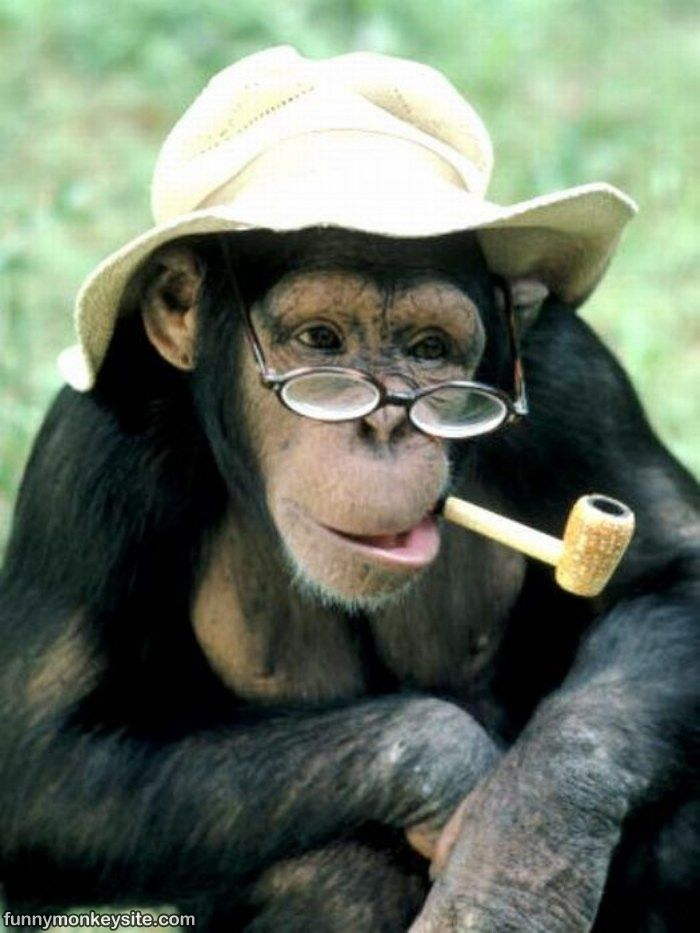 funny monkey wallpaper - photo #19
