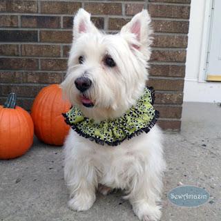 Spooky Spirals Halloween Dog Scrunchie Neck Ruffles