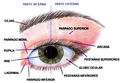 Ilustración del ojo humano señalando sus partes externas e internas