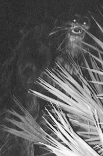 The Skunk Ape