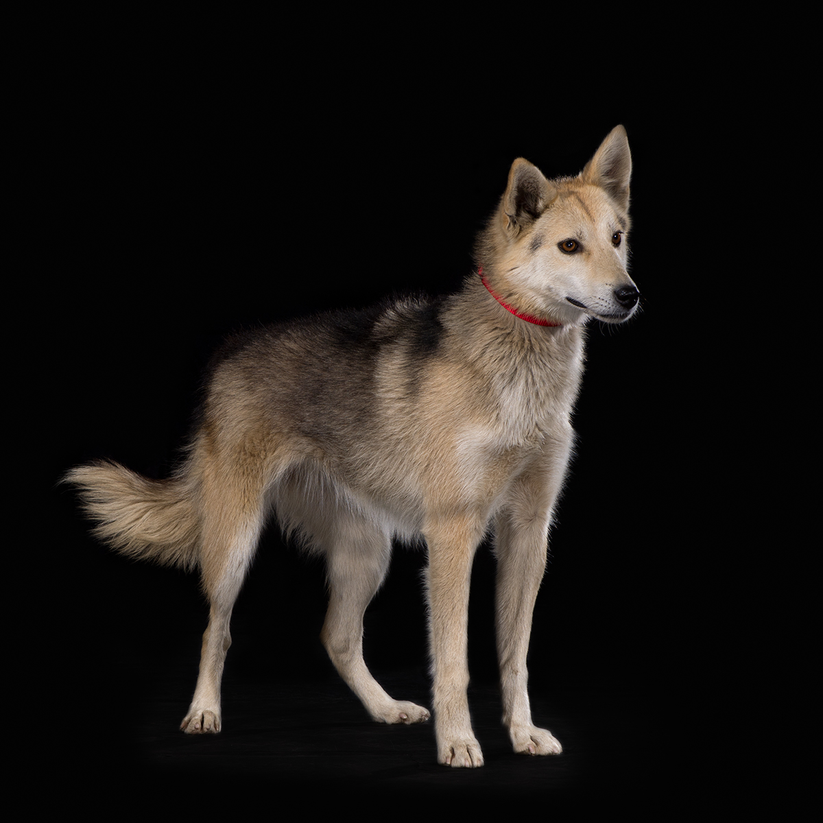 Dog With Fan : Chipper wins dog fan club draw sp kennel
