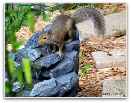Yard and Garden Secrets: Keep Squirrels out of Bird ...