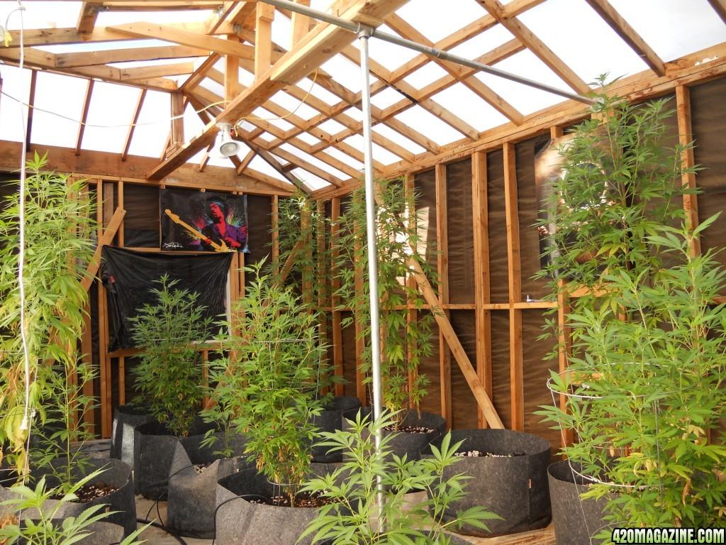 Michigan Medical Marijuana Report: Grow Tip for May 2017 - by Ben Horner