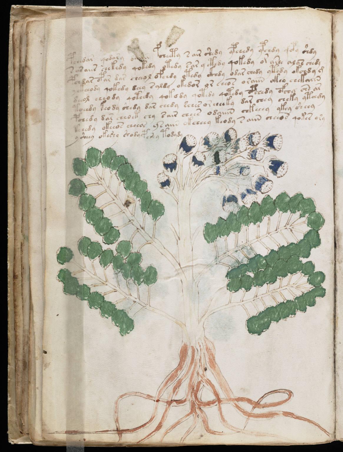 manuscrito050