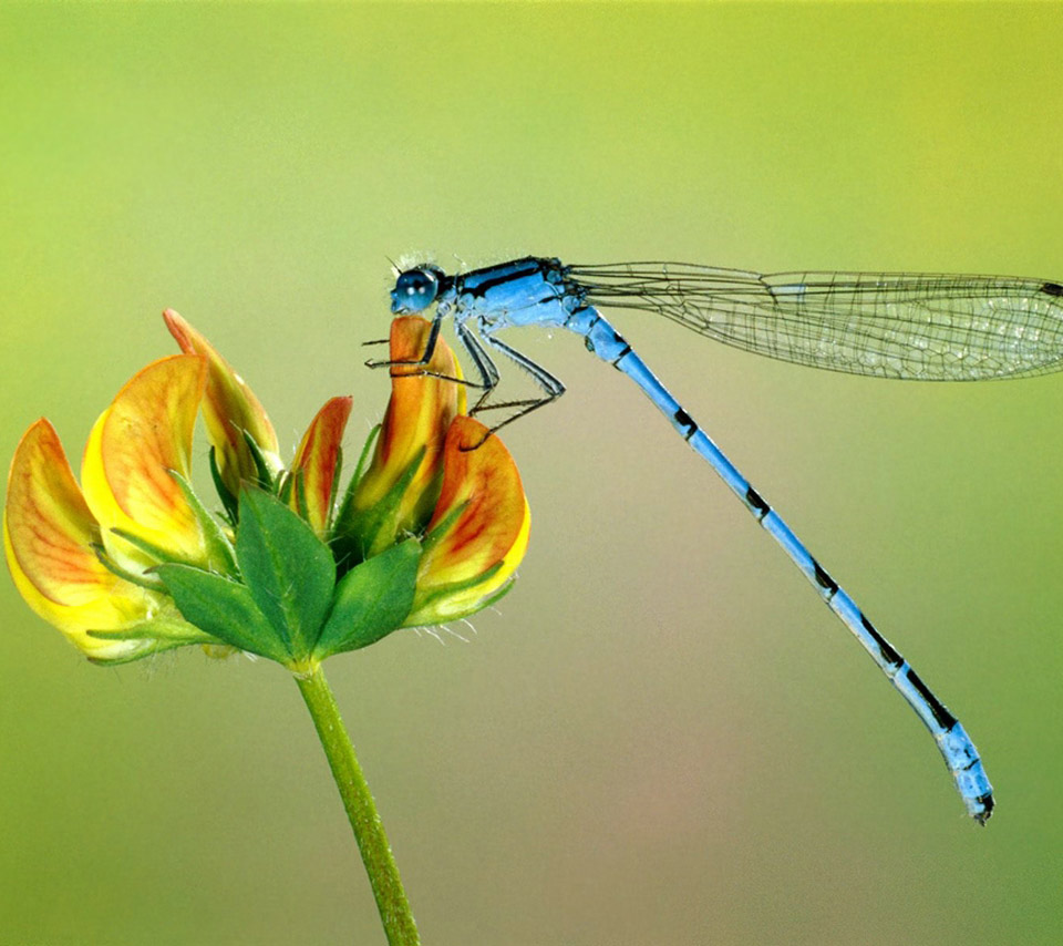 Observations From A Simple Life The Symbolism Of Dragonflies