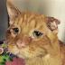 """Una mujer adoptó al """"gato más triste del mundo"""". Después de unas horas experimenta una transformación"""
