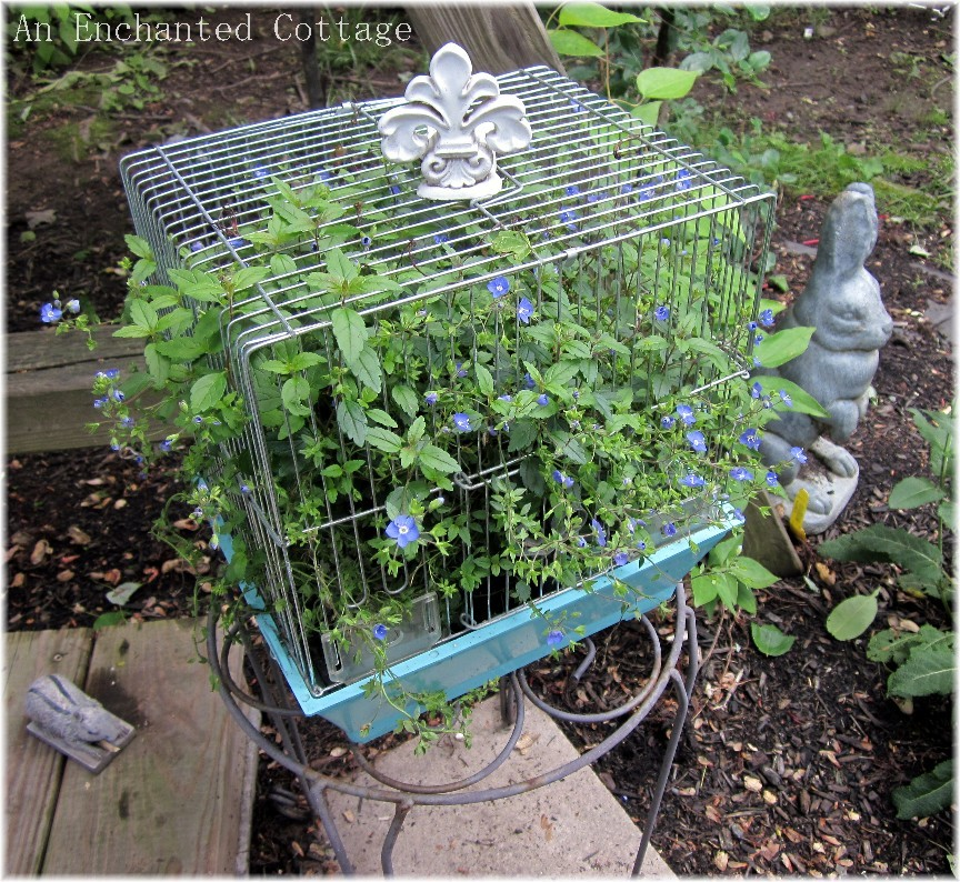 Bird Cage Planter: An Enchanted Cottage: Vintage Bird Cage Planter For The