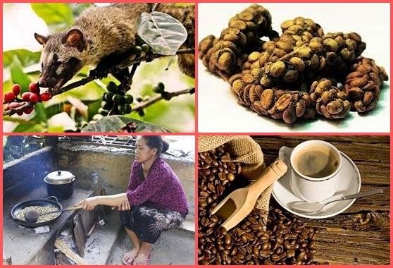 True story about Kopi Luwak, unique coffee from paradise ...  Kopi Luwak Coffee Plantations