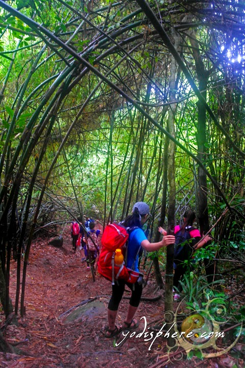 hover_share Hikers and mountaineers passing the bamboo forest going up Mt. Pico de Loro