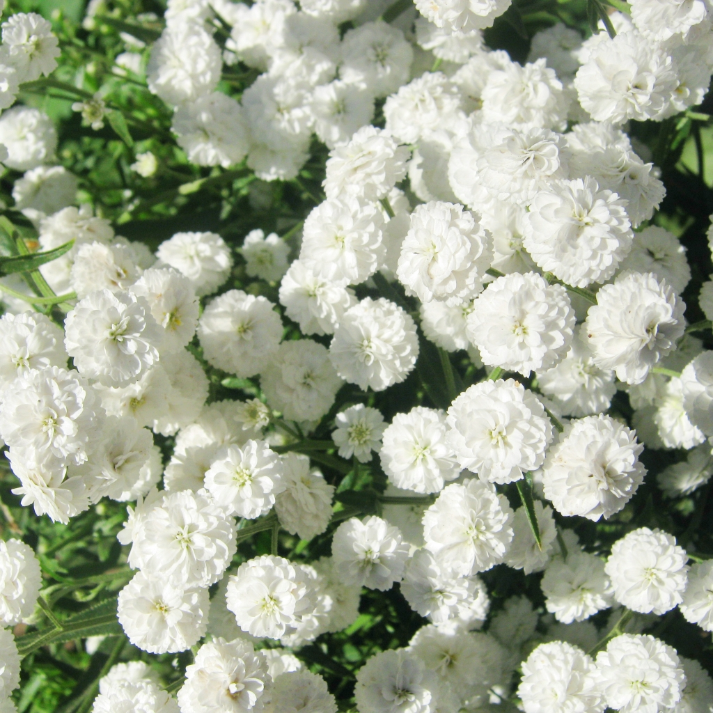 Romantic Flowers White Flowers