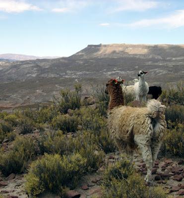 Bei den Lamas