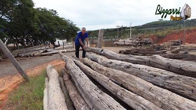 Bizzarri visitando um depósito de madeiras de demolição. Na foto garimpando peças de madeira de Aroeira de demolição. Acho lindo esses pilares de madeira de Aroeira para fazer pilares de terraço ou pilares de pergolado de madeira. 24 de março de 2017.