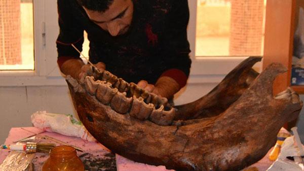 الجزائر : العثور على بقايا عظمية لوحيد القرن تعود لمئات آلاف السنين