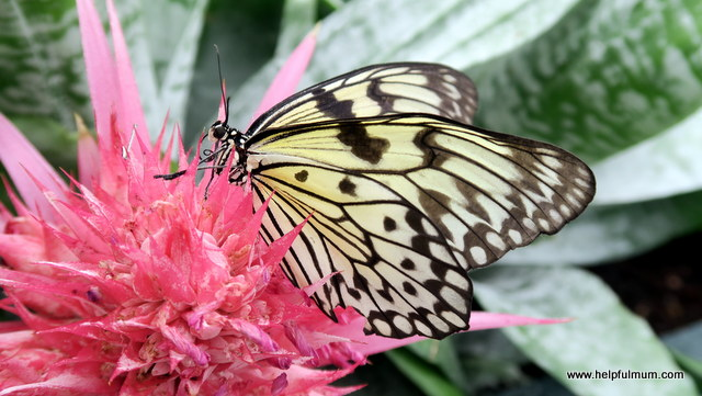Blenheim Palace Butterfly