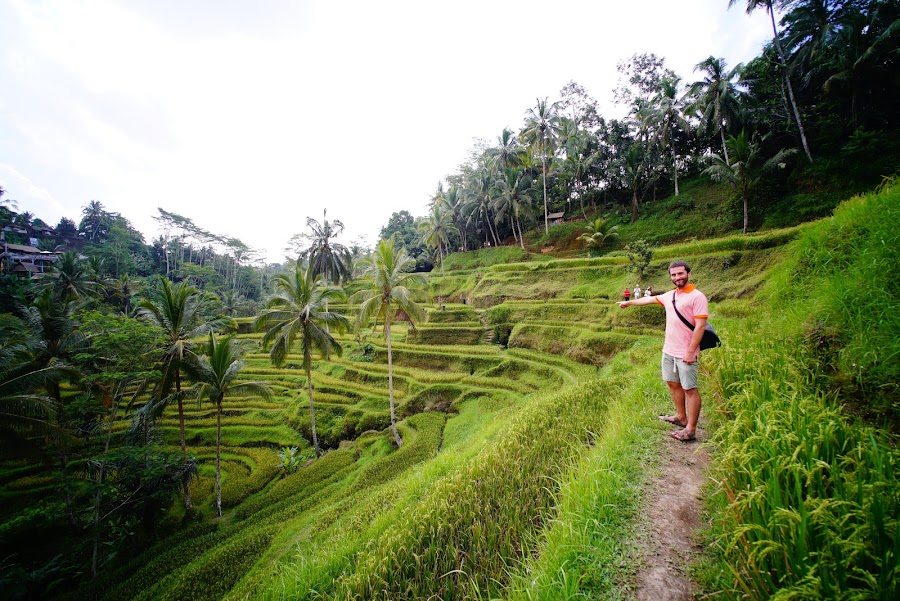 Tegalalang rice terraces in Ubud, Bali