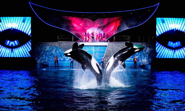 Summer Nights SeaWorld Shamu