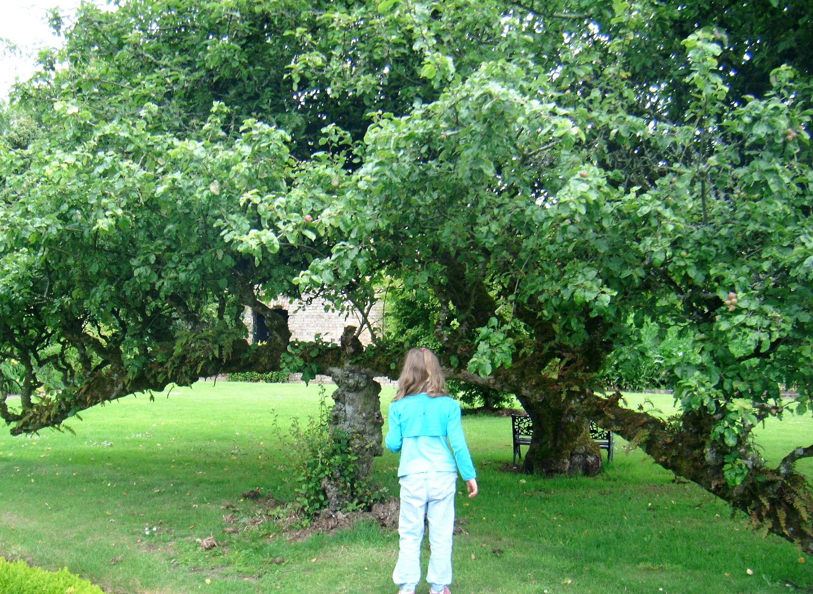 Fences Of Fruit Trees Resilience