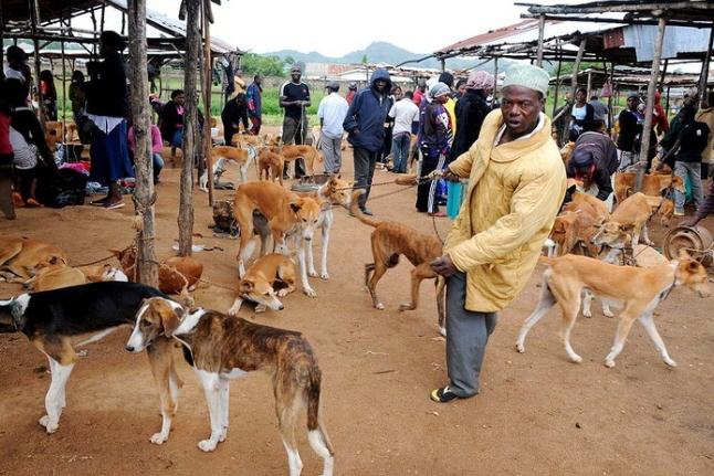 dog scarcity ekiti state