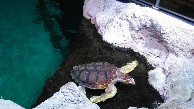 tortue, ocearium, aquarium, croisic, bullelodie