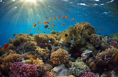 protect coral reefs in insular areas