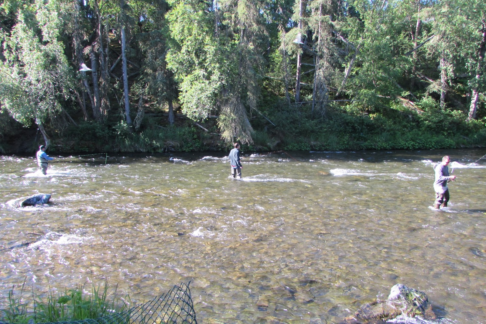Alaska fishing the russian river for Russian river fishing