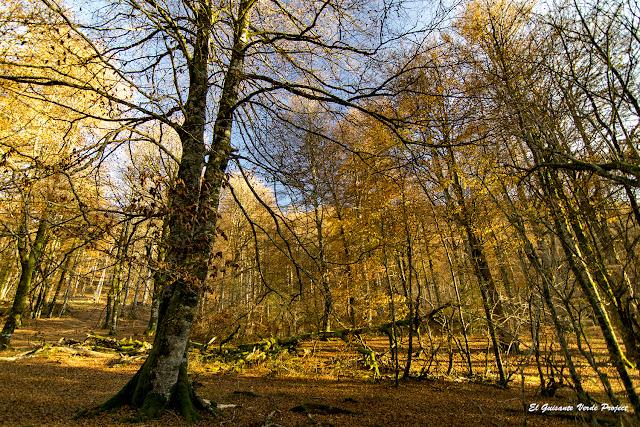 Otoño en la Selva de Irati - Navarra por El Guisante Verde Project