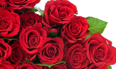 happy rose day 2016 messages