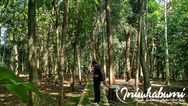Suasana hutan kota Kibatai
