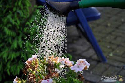 Water flower gardens regularly