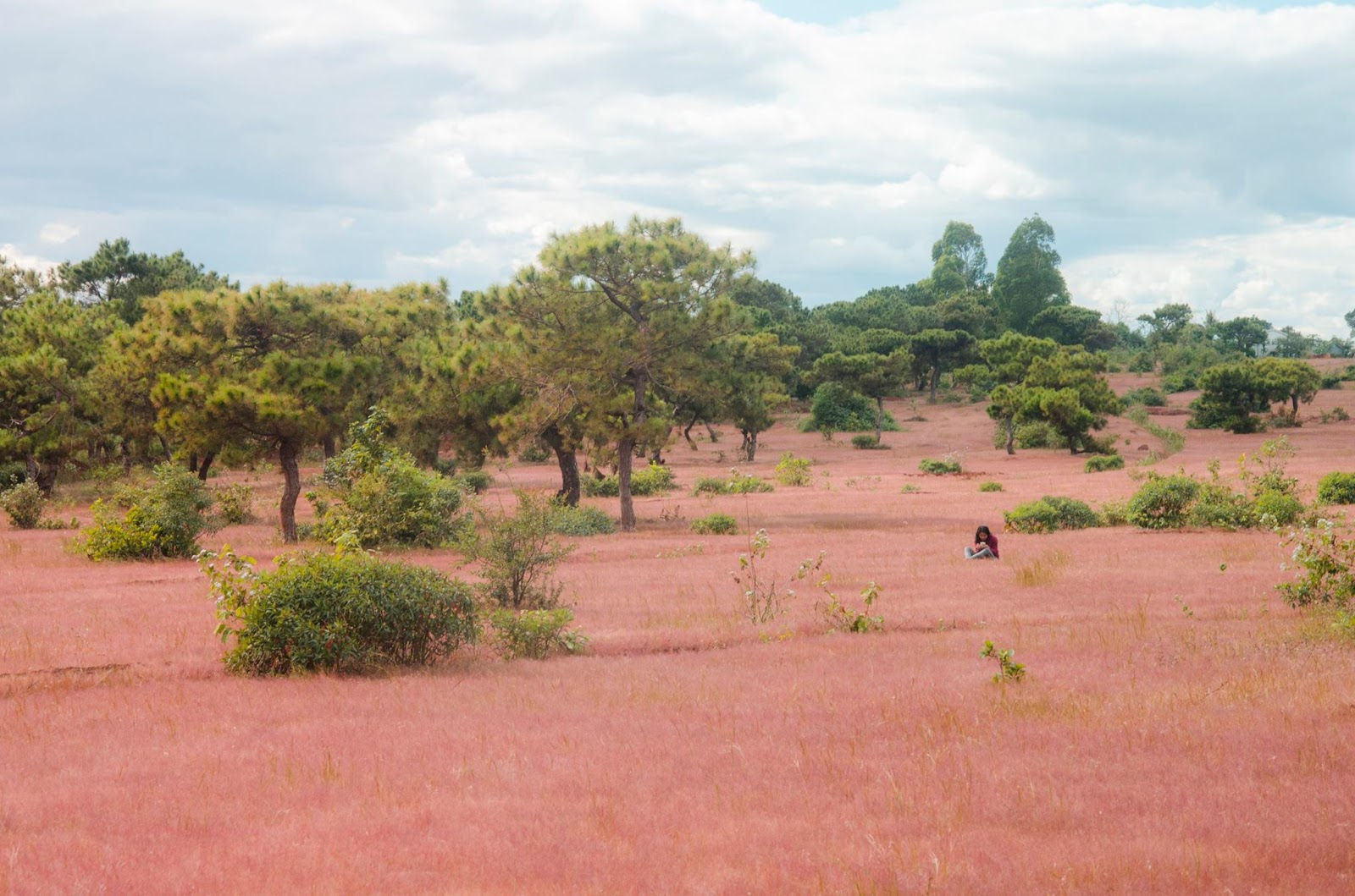 Gia Lai: Có nên xây sân golf trên rừng thông, đồi cỏ hồng Đắk Đoa?