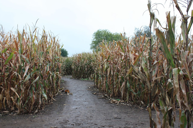 Twists and turns will have you guessing inside of the Richardson Corn Maze