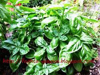 Μπαχαρικά, Βότανα και Αρωματικά - ποικιλίες και χρήσεις - από «Τα φαγητά της γιαγιάς»