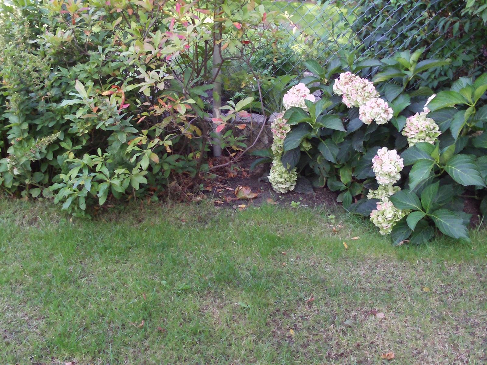 wann schneide ich hortensien lavendula schneiden im august doovi wann schneide ich meine. Black Bedroom Furniture Sets. Home Design Ideas
