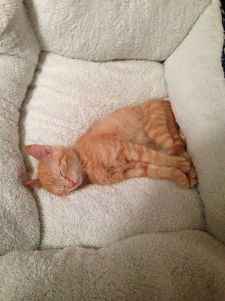 Funny cats - part 87 (40 pics + 10 gifs), little kitten sleeping in big cat bed