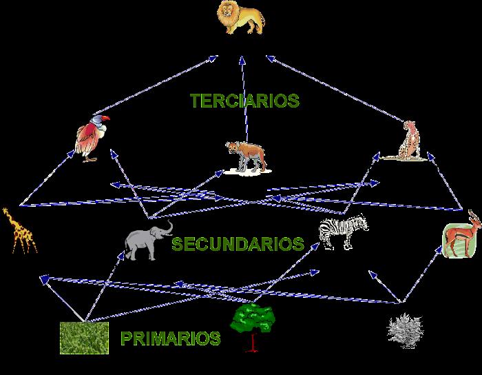 red,trofica,web,trophic, cadena, alimentacion