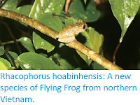 https://sciencythoughts.blogspot.com/2018/02/rhacophorus-hoabinhensis-new-species-of.html
