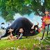 """Juanes en la película animada """"Olé, el viaje de Ferdinand"""""""