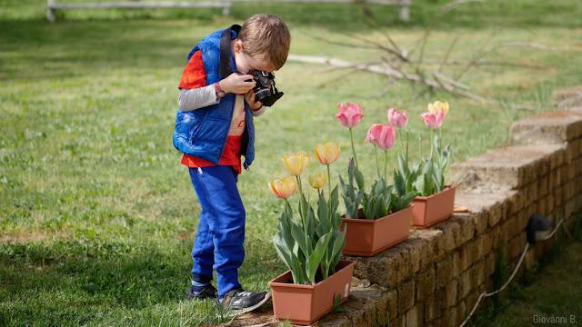 Bambino che fotografa tulipani