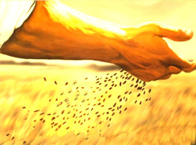 El resto cayó en tierra buena y dio grano