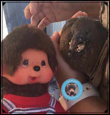 Popi le Monchhichi et Colombine le bébé pigeon - oisillon - pigeonneau