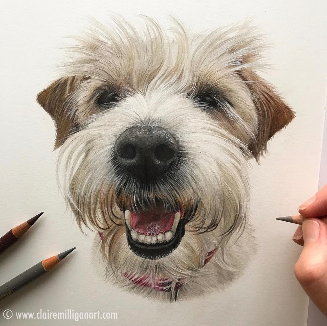 12-Scrabble-Claire-Milligan-Pet-Portraits-and-Wildlife-Art-www-designstack-co